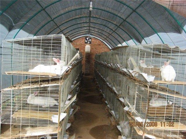 Клетки для кроликов своими руками из сетки видео